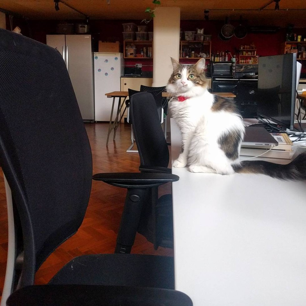 shelter-cat-employees-04