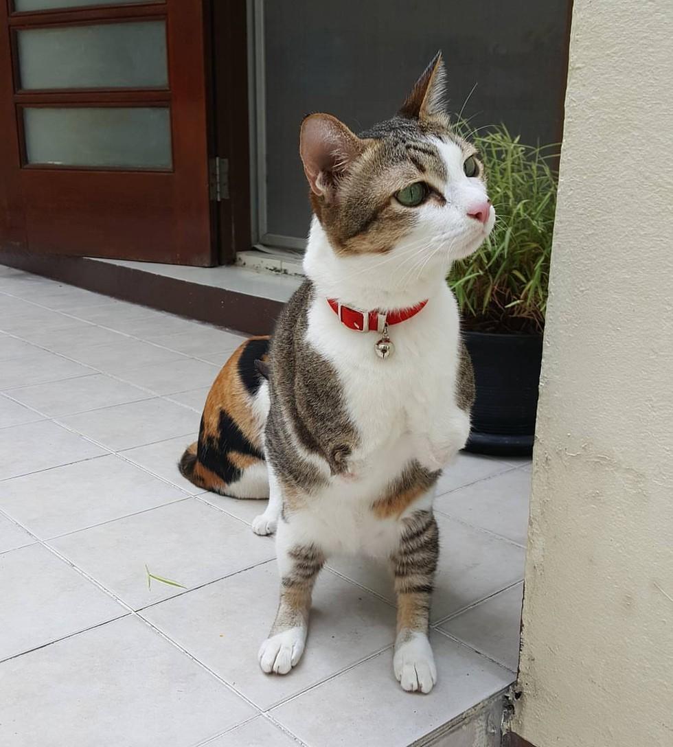 two-leg-cat-03
