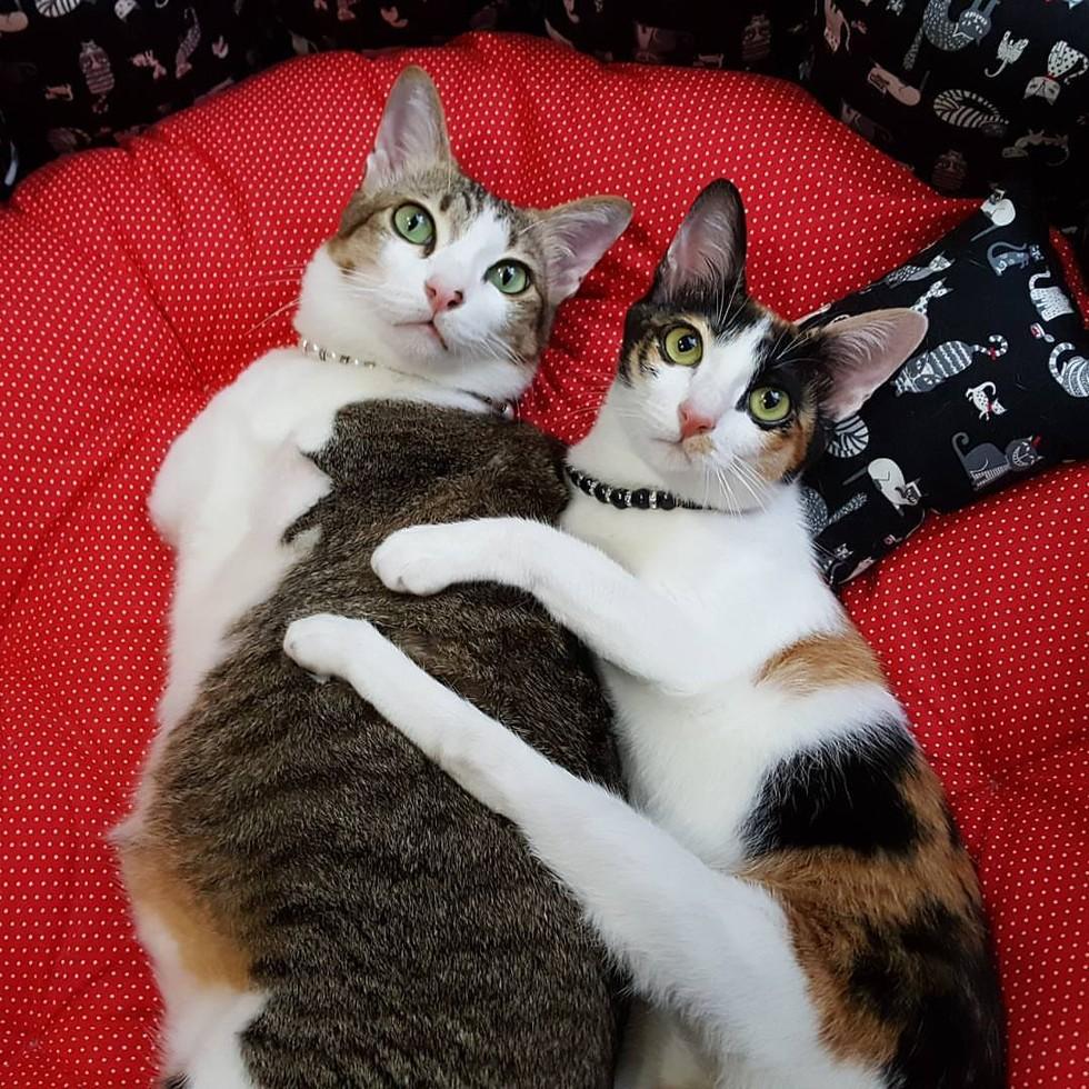 two-leg-cat-08