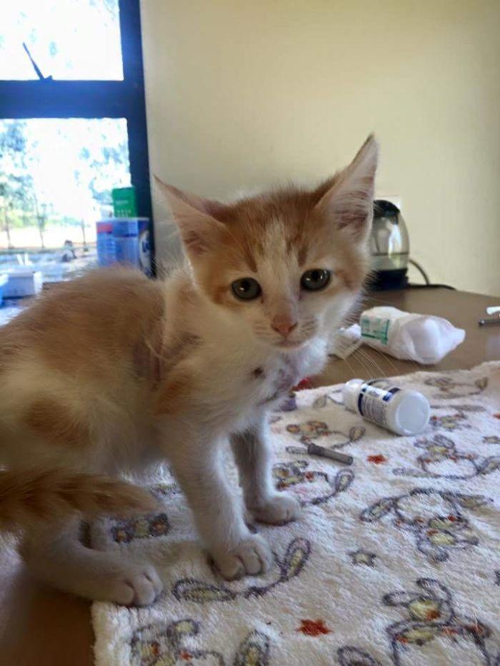 Disfigured-Kitten-Transformation-10