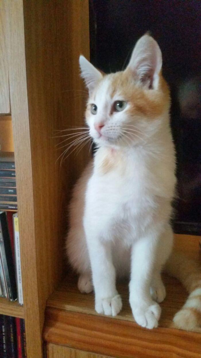 Disfigured-Kitten-Transformation-11