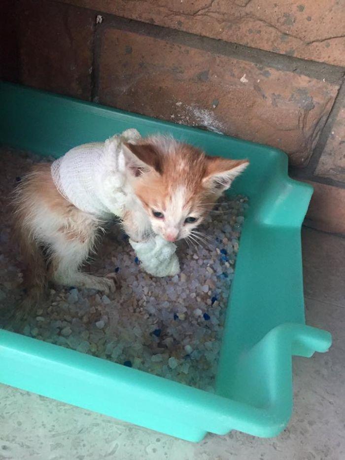 Disfigured-Kitten-Transformation-2