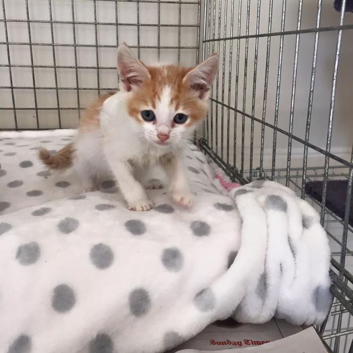 Disfigured-Kitten-Transformation-5