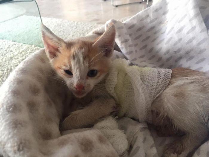 Disfigured-Kitten-Transformation-6