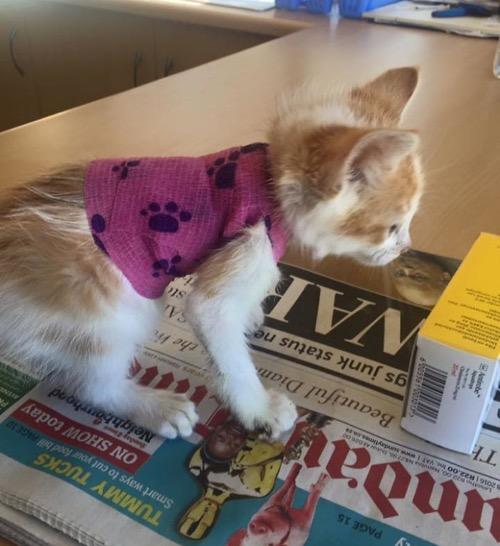 Disfigured-Kitten-Transformation-8