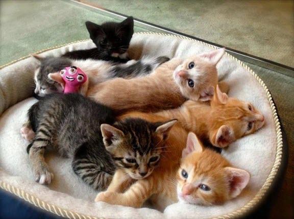 Popular-Cat-Names-3