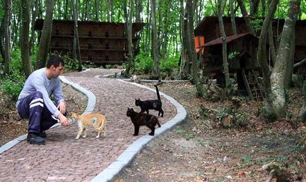 Small-Town-Built-For-Cats-1