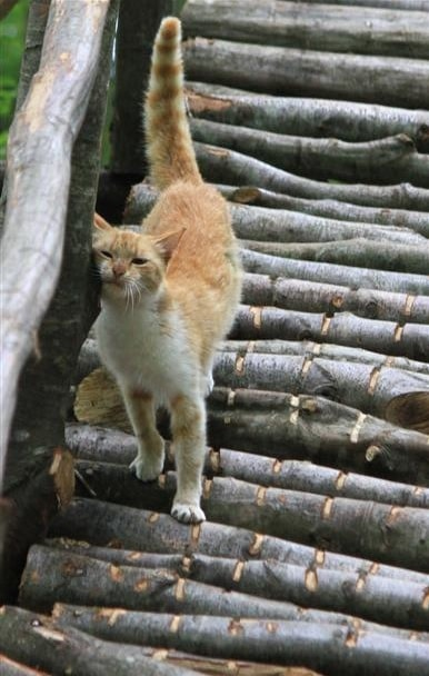 Small-Town-Built-For-Cats-10