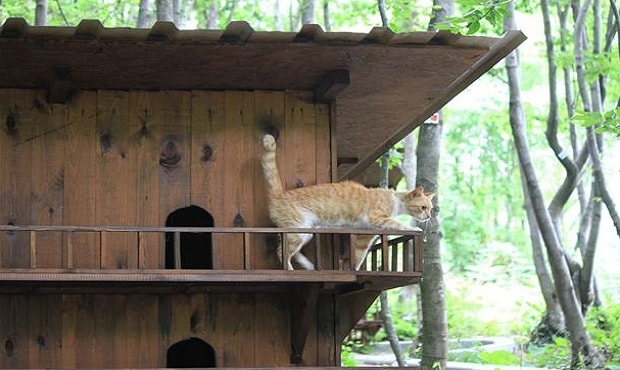 Small-Town-Built-For-Cats-11