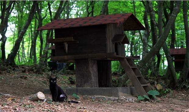 Small-Town-Built-For-Cats-13