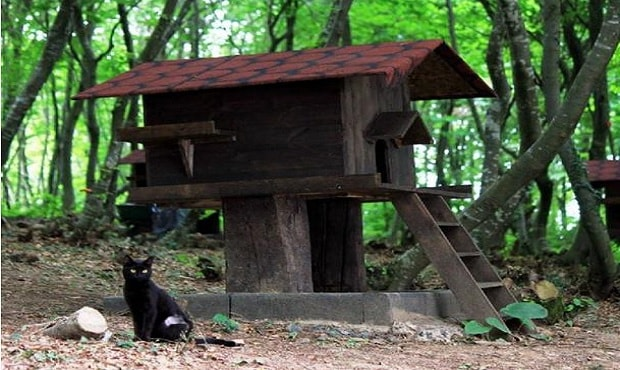 Small-Town-Built-For-Cats-2