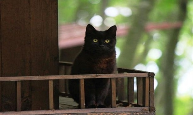Small-Town-Built-For-Cats-3