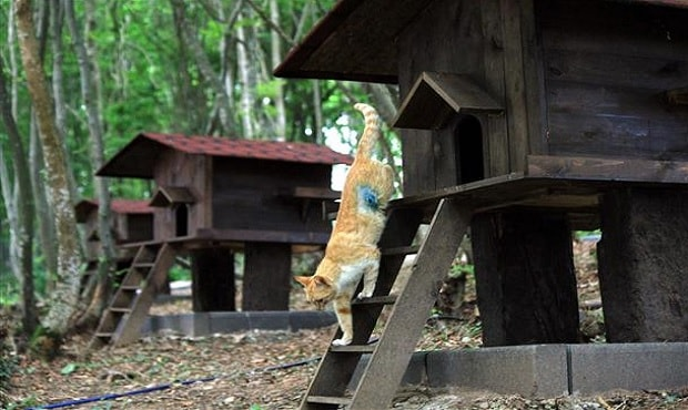 Small-Town-Built-For-Cats-6