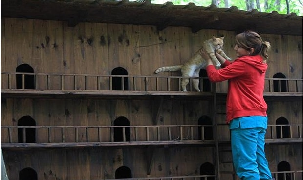 Small-Town-Built-For-Cats-7