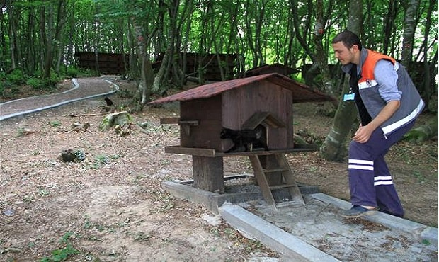 Small-Town-Built-For-Cats-8