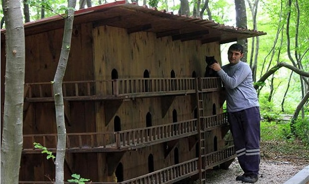 Small-Town-Built-For-Cats-9