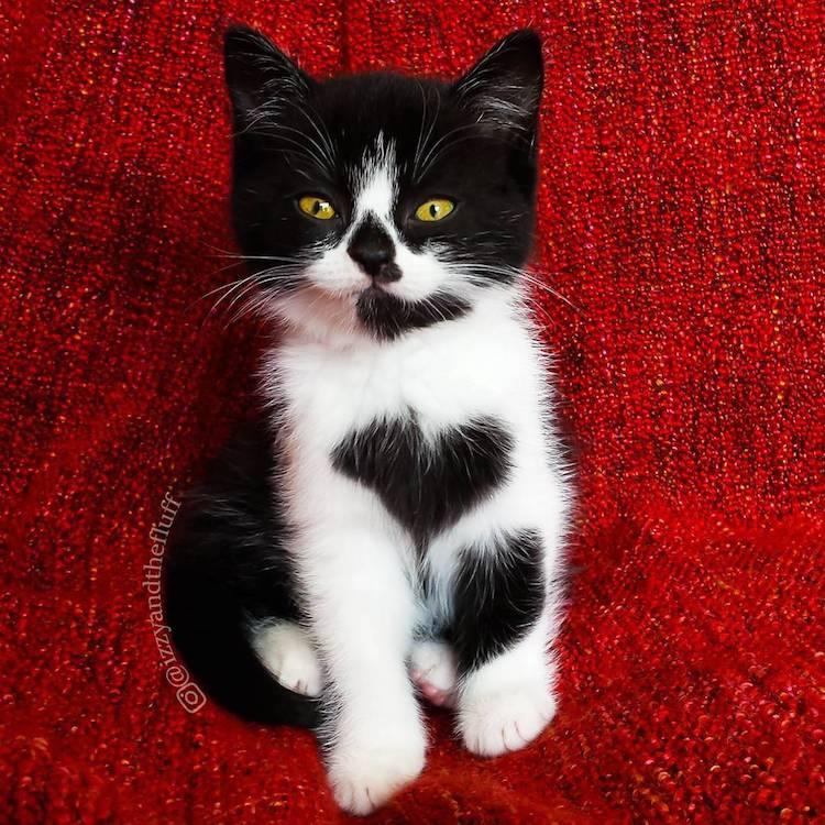 zoe-heart-on-chest-cat-1-2