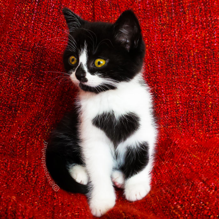zoe-heart-on-chest-cat-1