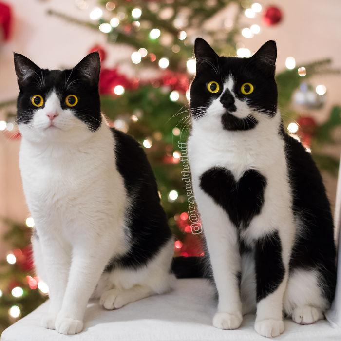 zoe-heart-on-chest-cat-10
