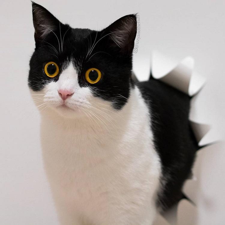zoe-heart-on-chest-cat-11-2
