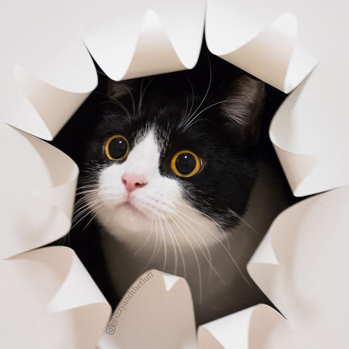 zoe-heart-on-chest-cat-11