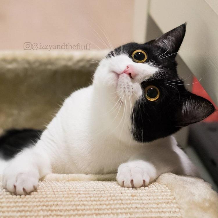 zoe-heart-on-chest-cat-12-2