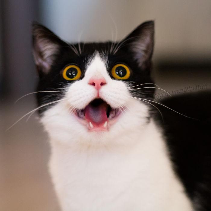 zoe-heart-on-chest-cat-12