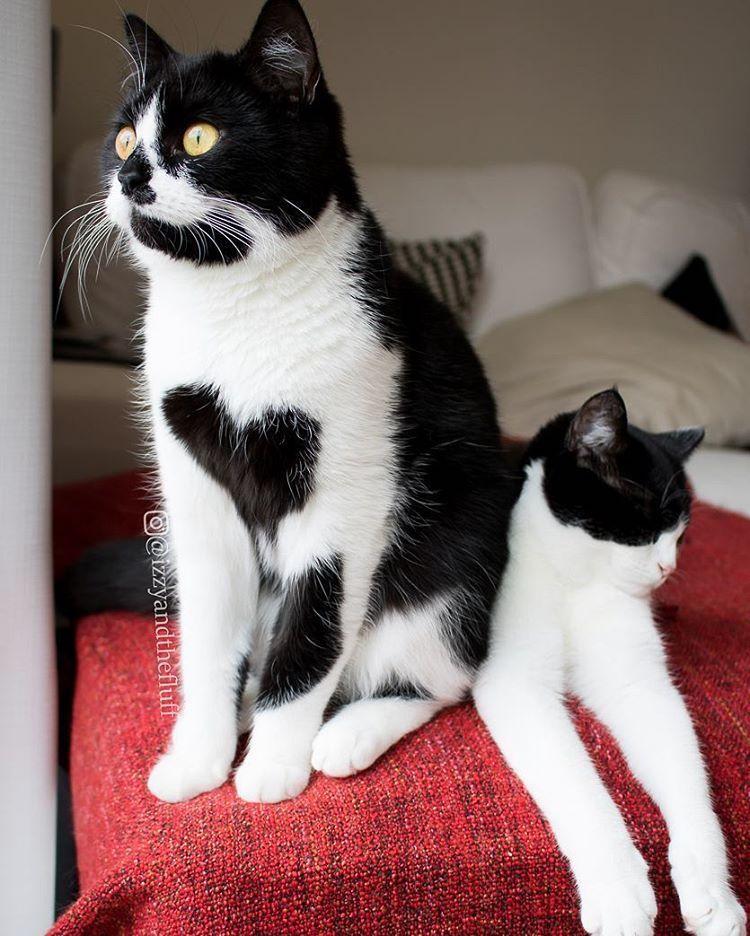 zoe-heart-on-chest-cat-13-2