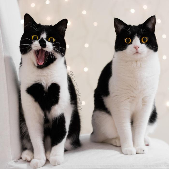 zoe-heart-on-chest-cat-13
