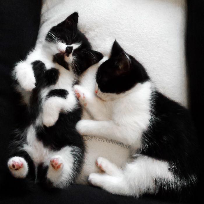 zoe-heart-on-chest-cat-2