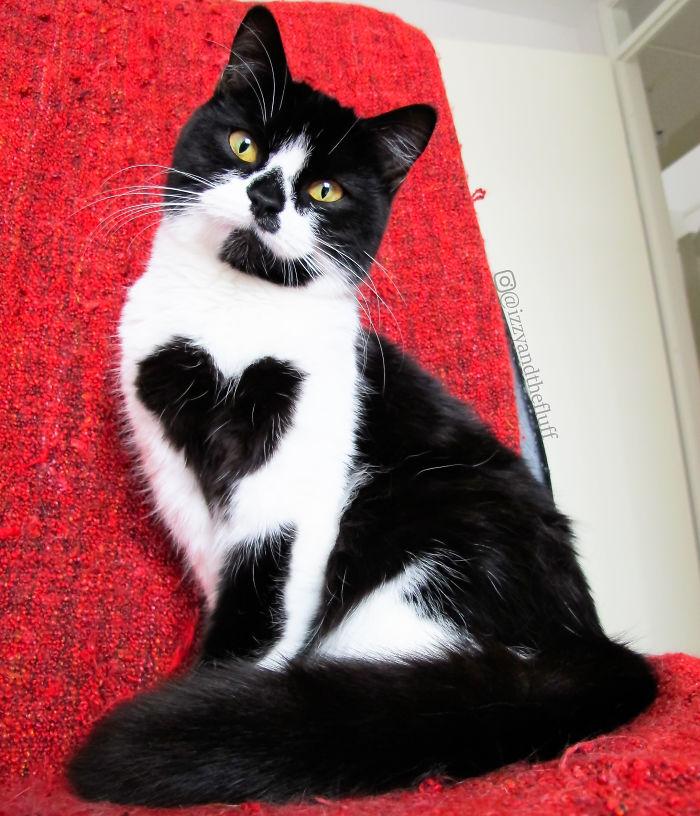 zoe-heart-on-chest-cat-4