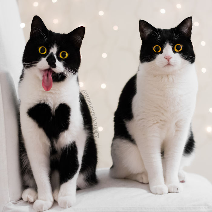 zoe-heart-on-chest-cat-6