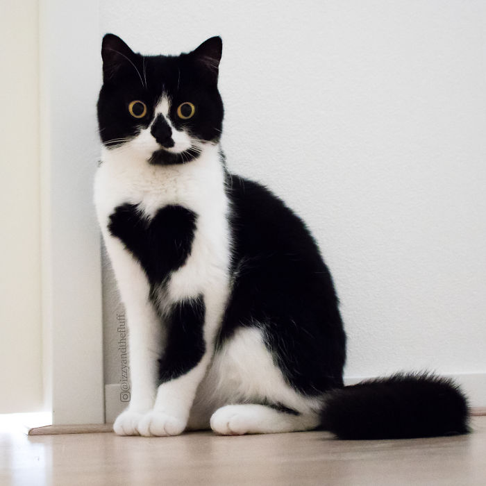 zoe-heart-on-chest-cat-7