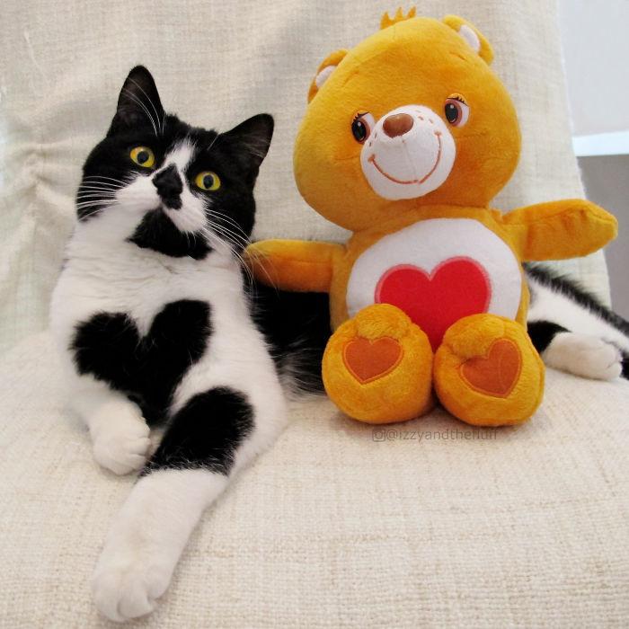 zoe-heart-on-chest-cat-8