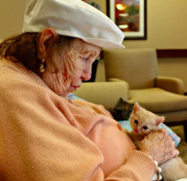 assisted-living-cat-07