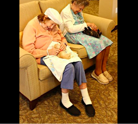 assisted-living-cats-01
