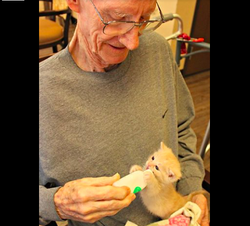 assisted-living-cats-02