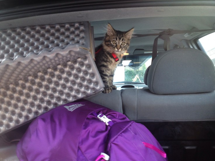 cat-camping-05