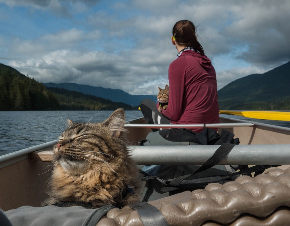cat-camping-08