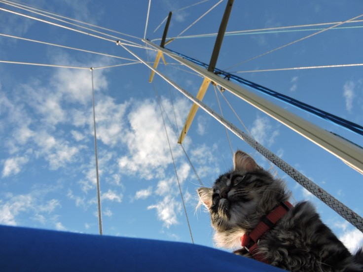 cat-camping-09