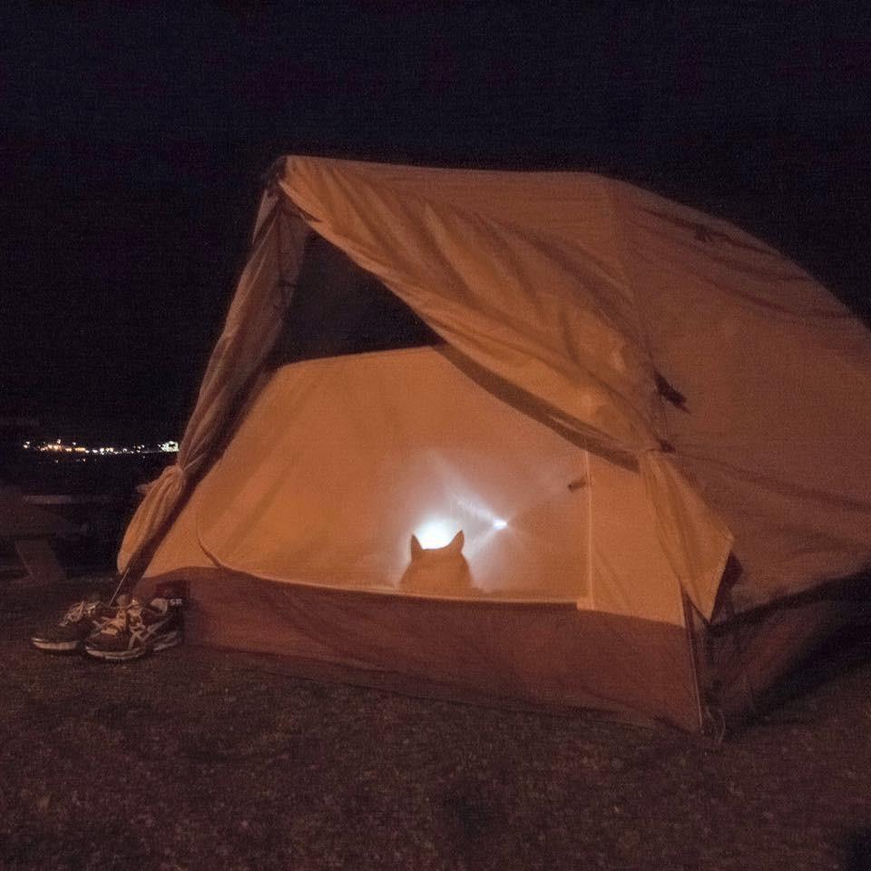 cat-camping-10