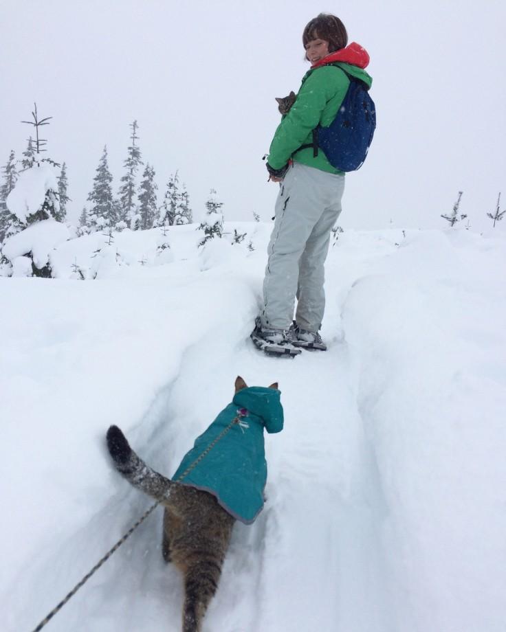 cat-camping-11