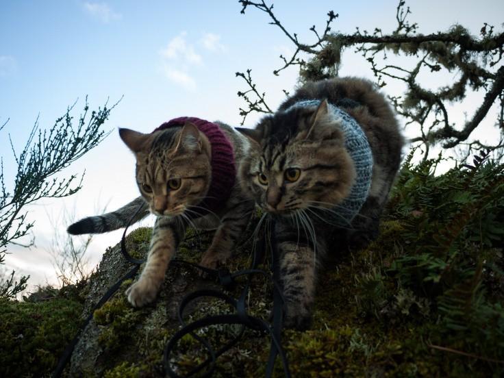 cat-camping-13