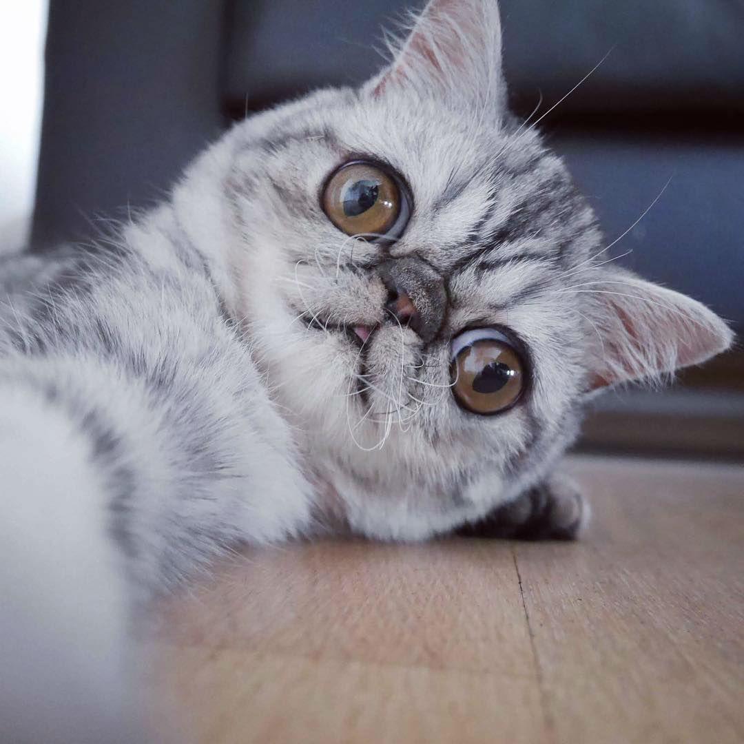 Картинки кот лупоглаз