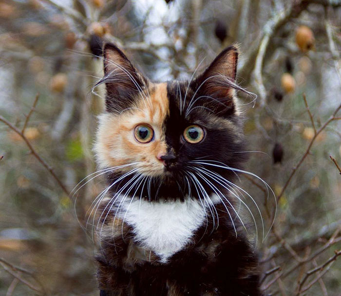 two-faced-kitty-10
