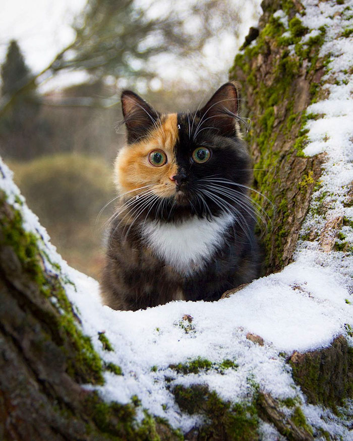 two-faced-kitty-4