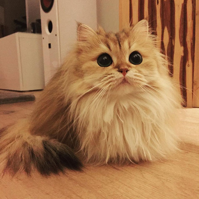 Smoothie-Most-Photogenic-Cat-8