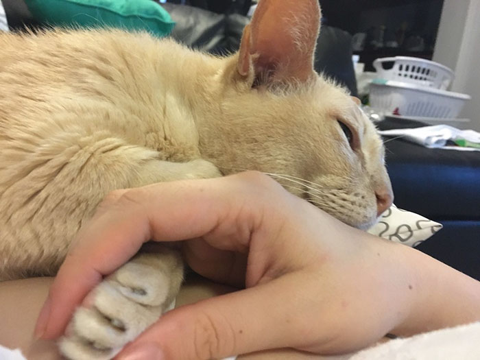 adopted-senior-cat-wants-holds-hands-jamie-1