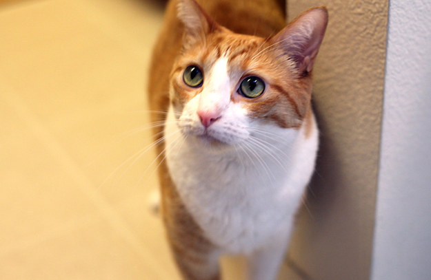 cat-bday-cake-11