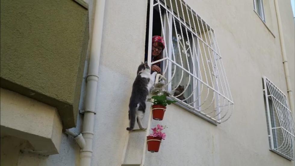 cat-ladder-lady-04